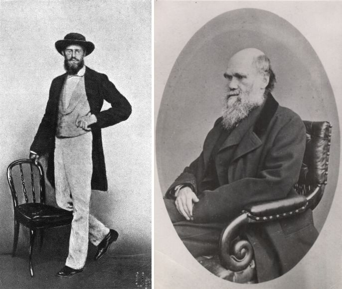 """Left: Photograph of Alfred Russel Wallace, taken in Singapore, 1862. Kilde: Marchant, James (1916) Alfred Russel Wallace — Letters and Reminiscences, Vol. 1. Photo: Unknown. Public Domain. Right: A photograph """"Carte de Visite"""" of Charles Darwin from 1867 by Ernest Edwards (1837-1903). Public Domain."""