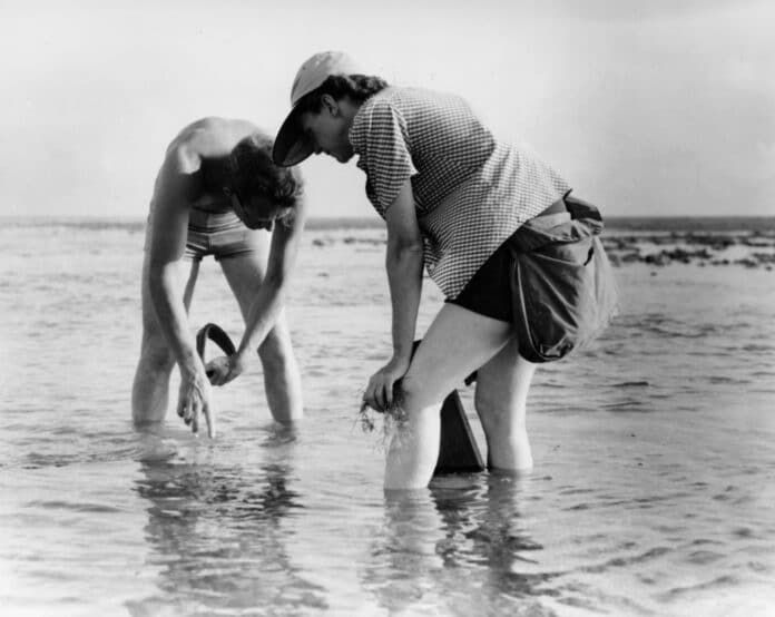Rachel Carson conducts Marine Biology Research with Bob Hines — in the Atlantic (1952). Photo: the United States Fish and Wildlife Service. Collection: the National Digital Library. Public Domain. See below May 24, 1907.