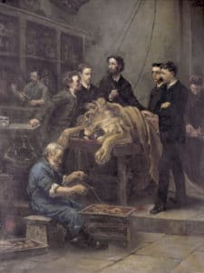 The Anatomy Lesson of Max Weber. From left to right, assistent Sleking, J.M. Janse, J.Th. Oudemans, prof. Weber, F.A.F.C. Went, unknown observer, son of assistent Sleking. In front, an old man, known as 'the last whaler'. Oil on canvas Louis Stracké (1856–1934), painted in 1886. Photo: Source/Photographer Universiteitsmuseum Amsterdam. Public Domain.