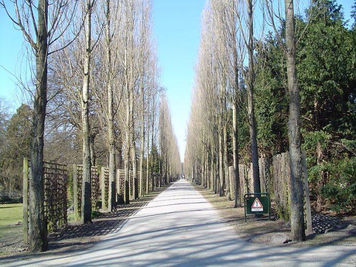 Poppelalleen op igennem Assistens Kirkegård imellem kapelvej og Jagtvej. Kilde: Wikimedia. Public domain. Kilde: Wikimedia Commons